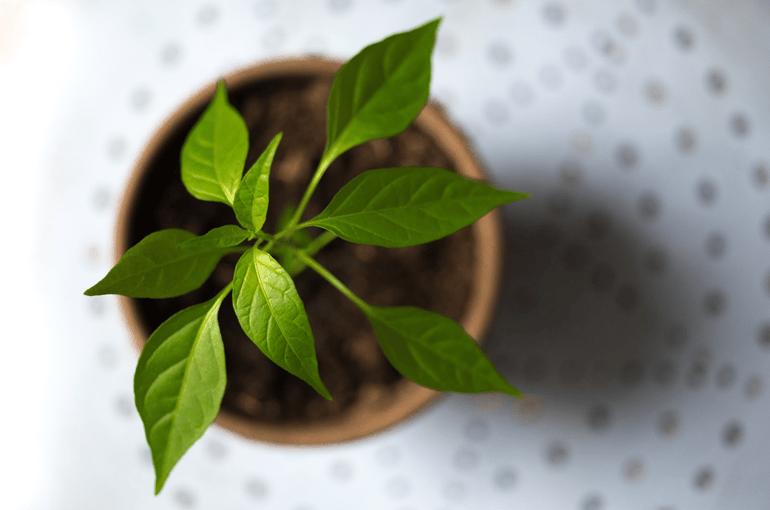 Leaf-in plant-pot
